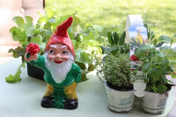 Gartenkräuter